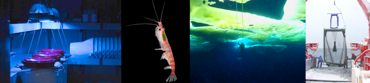 Biodiversity and Biological Processes in Polar Oceans